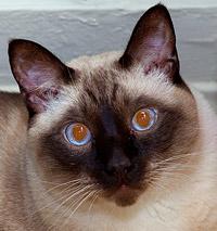 пример красноты глаз в результате вспышки